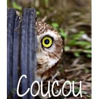 "Carte Humour Chouette ""Coucou"""