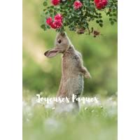 """Carte """"Joyeuses Pâques"""" Lapin et Roses rouges"""