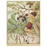 """Carte """"Fées des Fleurs"""" Cicely Mary Barker """"Aulne"""""""
