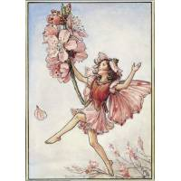 "Carte ""Fées des Fleurs"" Cicely Mary Barker ""Cerisier"""