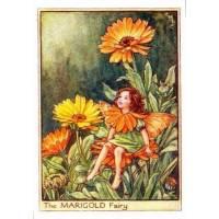 """Carte """"Fées des Fleurs"""" Cicely Mary Barker """"Souci"""""""