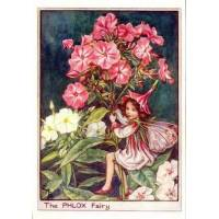 "Carte ""Fées des Fleurs"" Cicely Mary Barker ""Phlox"""