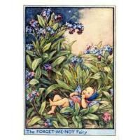 """Carte """"Fées des Fleurs"""" Cicely Mary Barker  """"Bébé et Myosotis"""""""