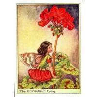 "Carte ""Fées des Fleurs"" Cicely Mary Barker ""Géranium"""