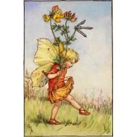 "Carte ""Fées des Fleurs"" Cicely Mary Barker ""Genêt"""