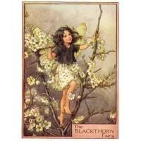 "Carte ""Fées des Fleurs"" Cicely Mary Barker ""Aubépine"""