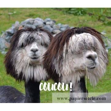 """Carte """"Coucou"""" Lamas rigolots"""