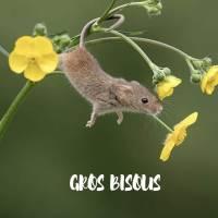 """Carte """" Gros Bisous"""" Petite souris et fleurs"""