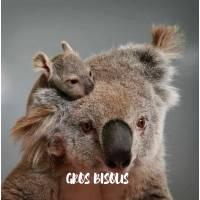 "Carte ""Gros Bisous""Maman Koala et Bébé"
