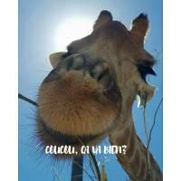 """Carte """"Coucou ça va bien?"""" Girafe"""