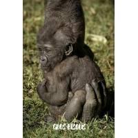 """Carte """"Gros Bisous"""" Bébé Gorille dans la main de Maman"""