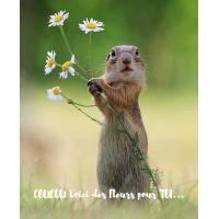 """Carte """"Coucou"""" Voici des Fleurs pour toi Marmotte"""
