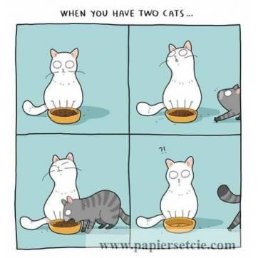 """Carte Chat  """"Quand vous avez 2 chats""""..."""