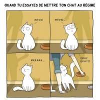 """Carte Chat """"Quand tu essayes de mettre ton chat au régime"""""""