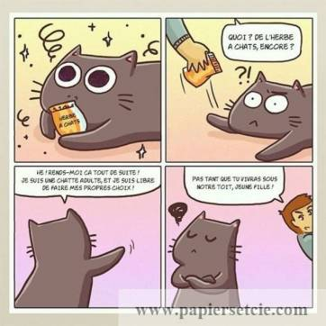 "Carte Chat ""L'herbe à chats"""