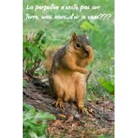 """Carte Humour Ecureuil """"La perfection n'existe pas sur terre,mais alors...d'où je viens?"""""""