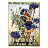 Carte Anniversaire Fées des Fleurs Bleuets