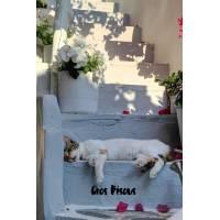 """Carte """"Gros Bisous"""" Chat endormi sur Escaliers fleuris"""
