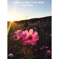 """Citation Bonheur """" Un obstacle au Bonheur, c'est de s'attendre à trop de Bonheur"""""""