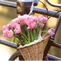 Carte Tulipes roses et Vélo