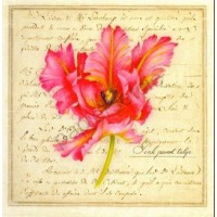 Carte Vincent Jeannerot Pink Parrot Tulip