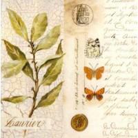 Carte Pascal Cessou Laurier