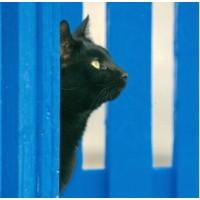 Carte Chat noir et barrière bleue