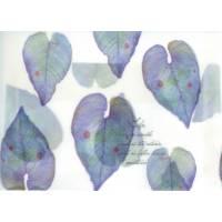 Enveloppe cadeau papier calque imprimé feuilles  bleues