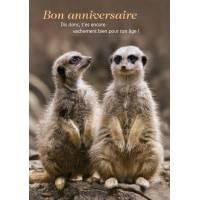 """Carte double Bon Anniversaire """"Dis donc t'es encore vachement bien ..."""""""
