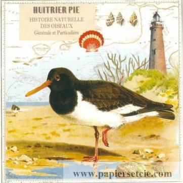 Carte d'art Gwenaëlle Trolez Huitrier Pie